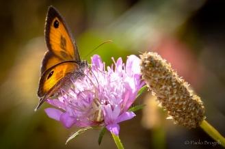 La danza della farfalla 2