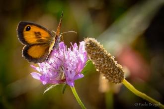 La danza della farfalla 4
